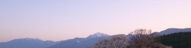駆け足で過ぎ去っていく春の夕暮れに。鼎談桜(2018.4.15~21)