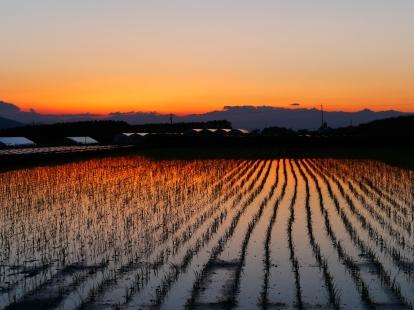 日没の水田2