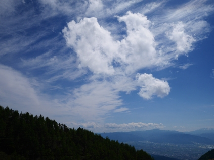 美ヶ原のレンゲツツジ2018_5