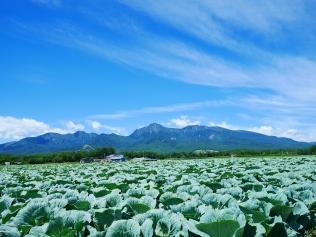 晩夏の空と高原野菜畑1