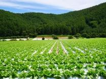 晩夏の空と高原野菜畑2
