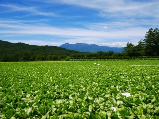 晩夏の空と高原野菜畑3