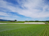 晩夏の空と高原野菜畑4