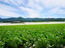 晩夏の空と高原野菜畑5
