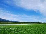 晩夏の空と高原野菜畑6