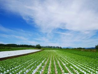 晩夏の空と高原野菜畑7