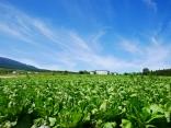 晩夏の空と高原野菜畑11