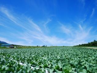 晩夏の空と高原野菜畑12