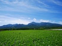 晩夏の空と高原野菜畑13