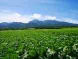 晩夏の空と高原野菜畑15