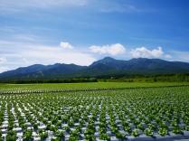 晩夏の空と高原野菜畑16