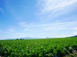 晩夏の空と高原野菜畑17