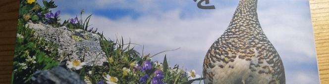 今月の読本「ライチョウを絶滅から守る!」(中村浩志・小林篤 しなのき書房)もう躊躇は出来ない、第一人者の想いとこれから