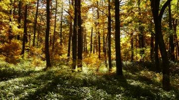 黄金色に輝く森の中6