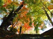 旧藤沢小学校の紅葉1