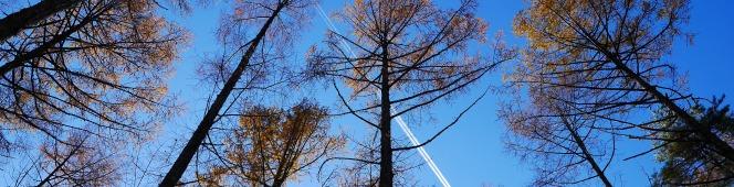 暖かな晩秋の午後、落葉松林で(2018.11.11)