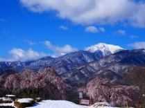 雪と桜と甲斐駒と1