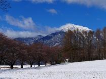 雪と桜と甲斐駒と7
