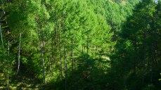 新緑に染まる落葉松の谷