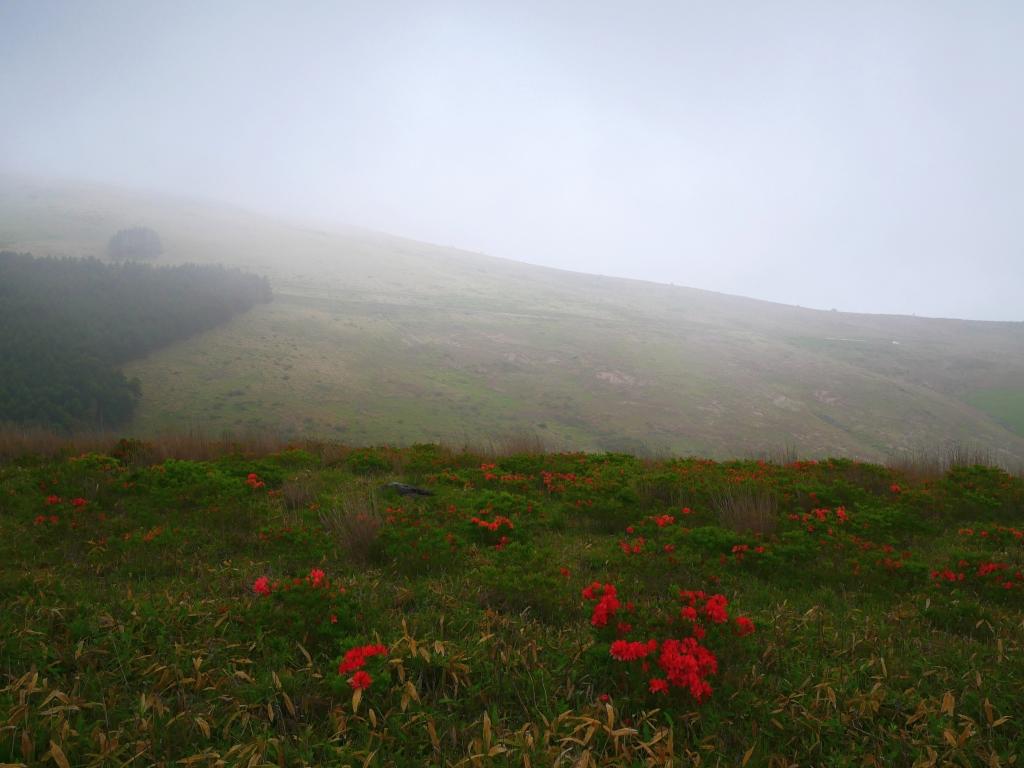 梅雨の夕景_霧ヶ峰とレンゲツツジ