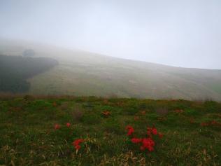 梅雨の夕景4_霧ヶ峰のレンゲツツジ