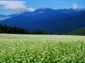 蕎麦畑と甲斐駒1
