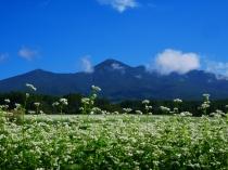 蕎麦畑と八ヶ岳2