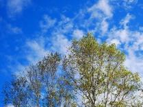まだ浅い秋色の八千穂高原7