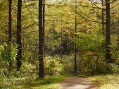 まだ浅い秋色の八千穂高原8