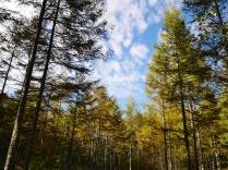 まだ浅い秋色の八千穂高原9