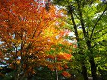 秋色の小路で3