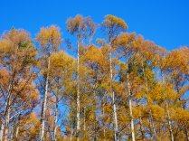 八ヶ岳西麓の落葉松黄葉2019_4