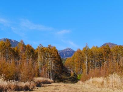 八ヶ岳西麓の落葉松黄葉2019_8
