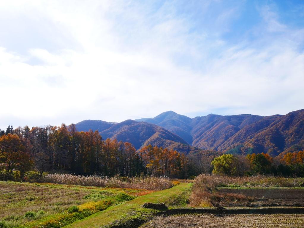 落葉松林と南アルプス