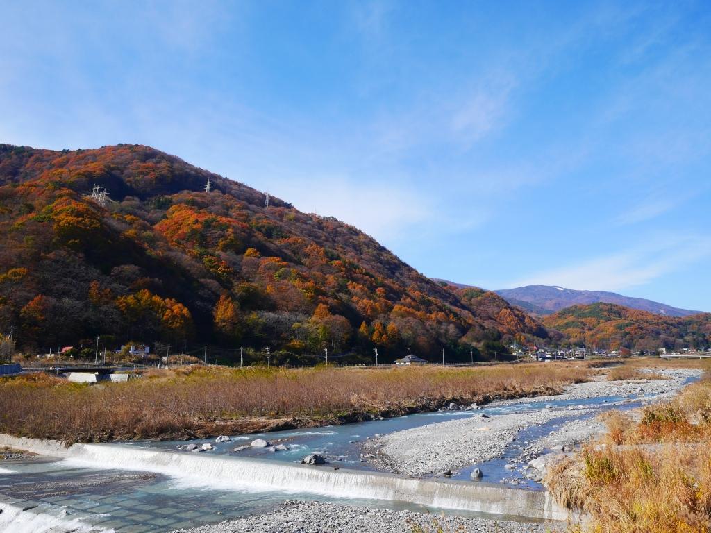 釜無川から望む落葉松の黄葉