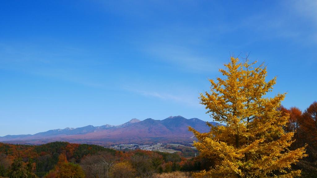 銀杏の黄葉と八ヶ岳