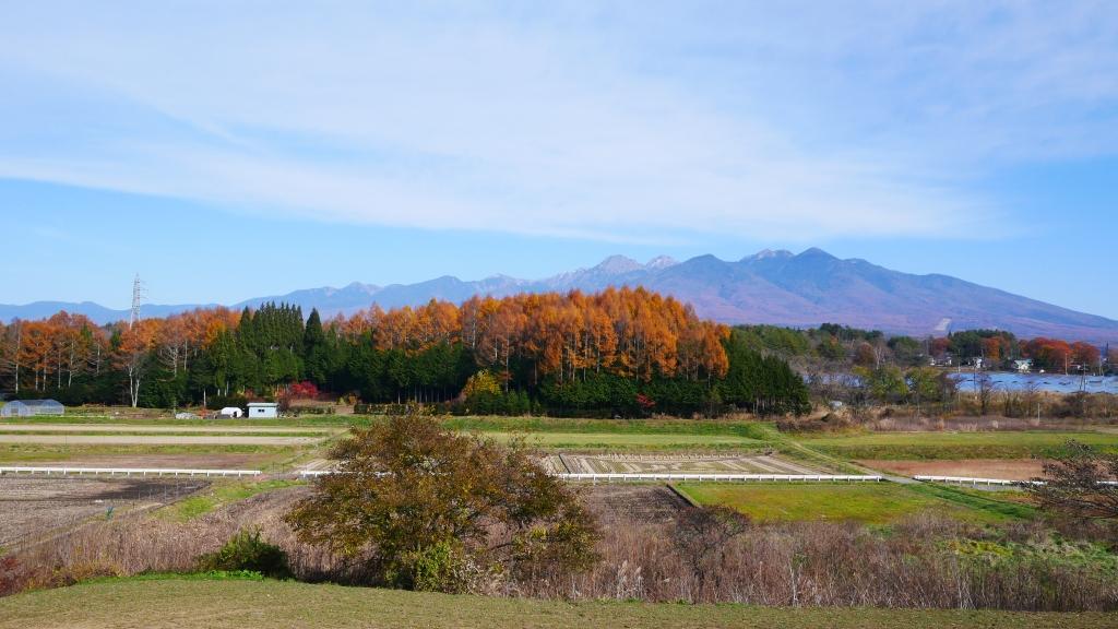 八ヶ岳の遠望と落葉松林