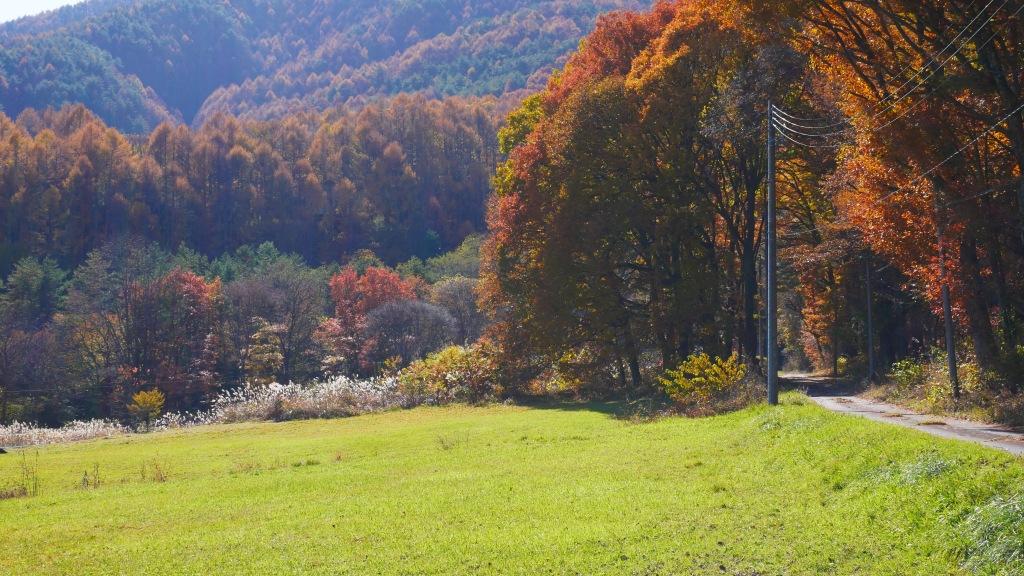 牧草地の落葉松林