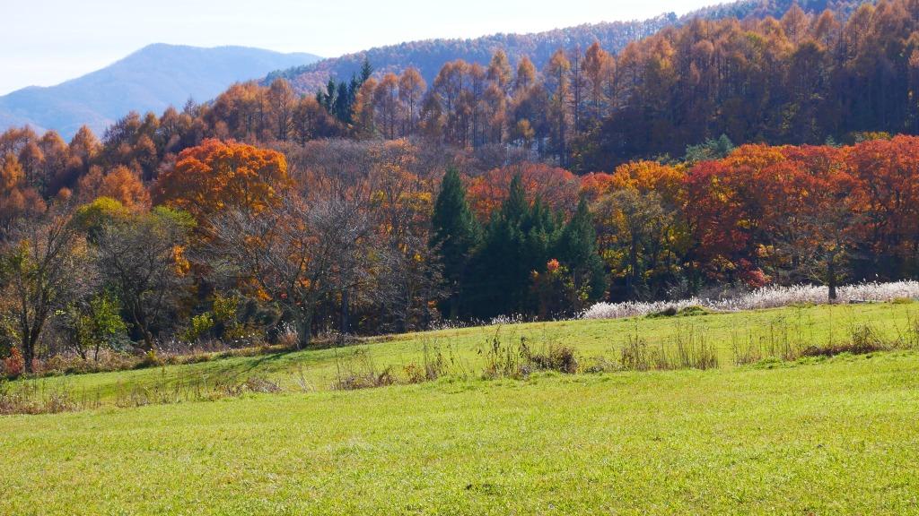 稜線沿いの落葉松林