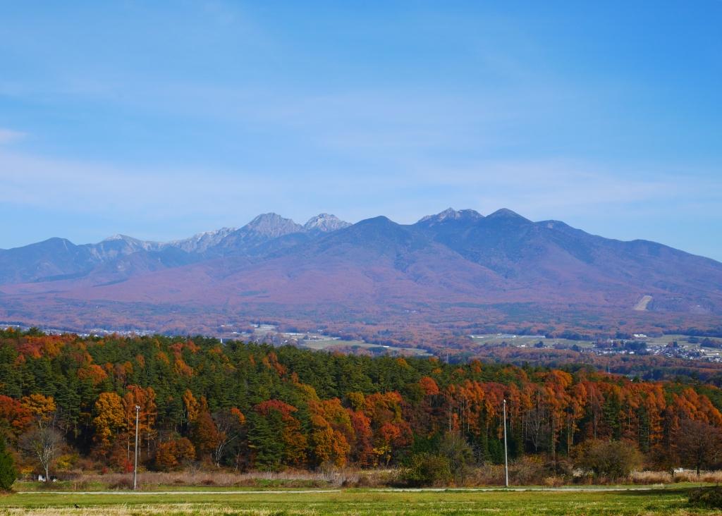 落葉松の黄葉に染まる八ヶ岳西麓