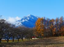 冠雪する甲斐駒と落葉松の黄葉